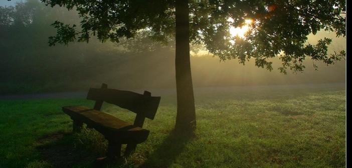 panchina-nel-parco