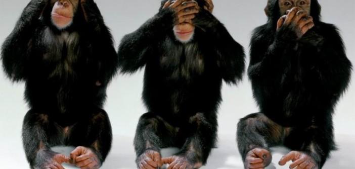 3-scimmiette