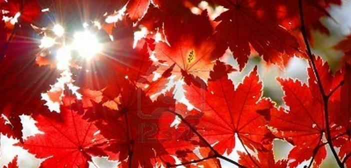 rosso-novembre