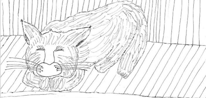 gatto-appunti