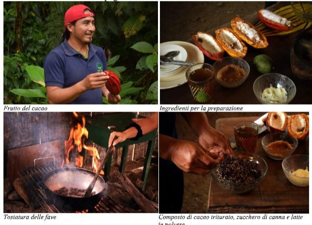 coltivazione cacao