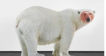 polar bear katia novitskova